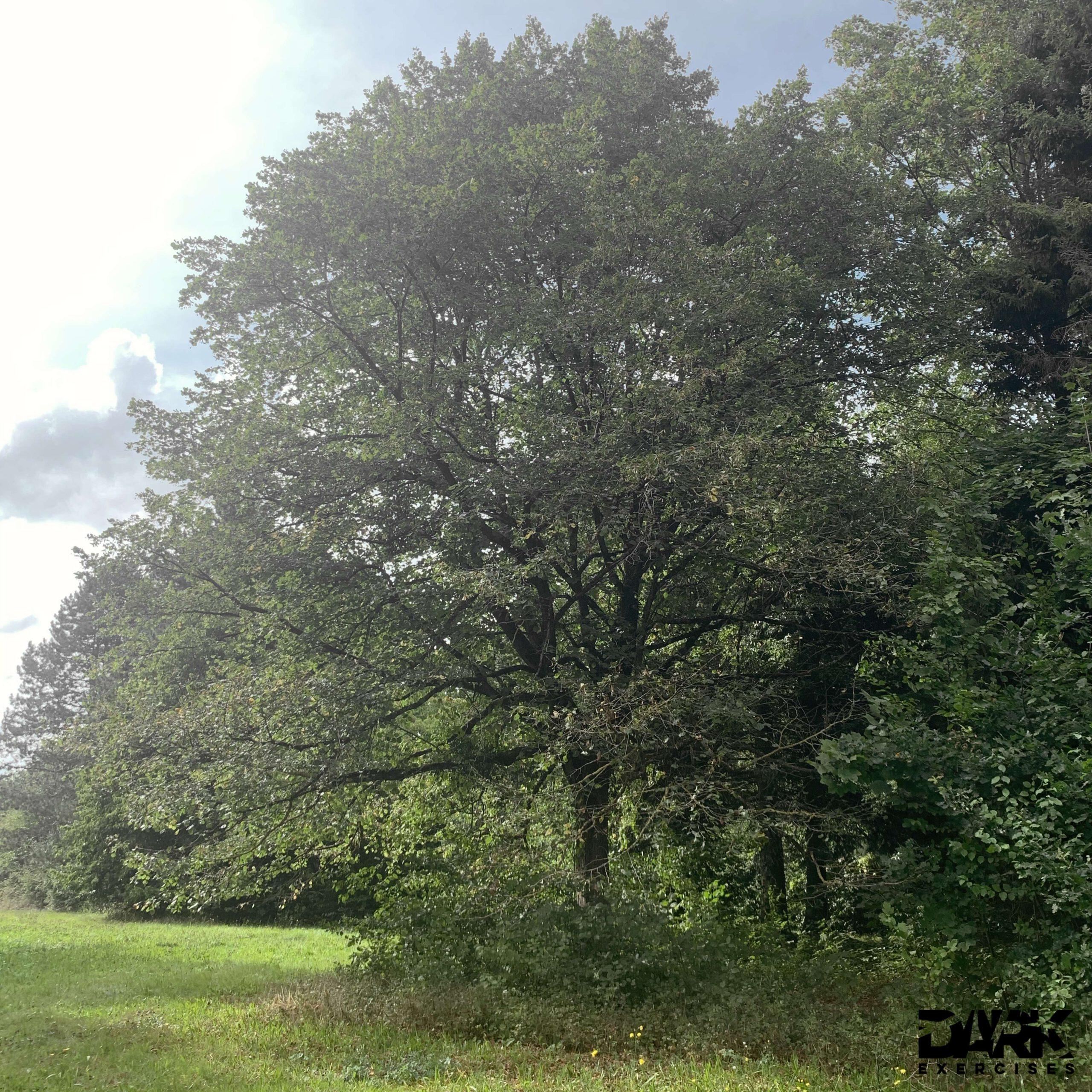 """My"" tree"